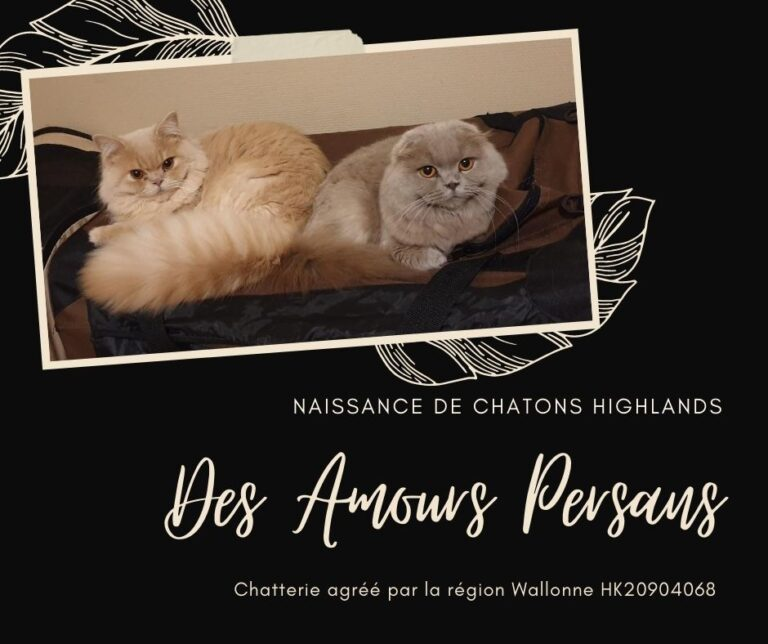 Chatons Highlands